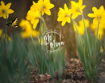 Butterfly Garden/ Spring Summer Badkground / Easter Backdrop/ Digital Backdrop/ Digital Background/ Digital Art