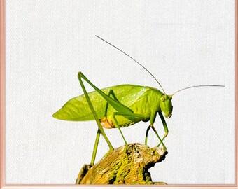 Grasshopper wall art / Grasshopper home decor / Grasshopper Print / Grasshopper Art / Grasshopper Wall Decor / home decor Grasshopper #86