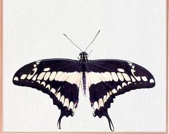 Butterfly wall art / Butterfly home decor / Butterfly Print / home decor Butterfly / Butterfly Art / Butterfly Wall Decor #74