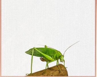 Grasshopper wall art / Grasshopper home decor / Grasshopper Print / Grasshopper Art / Grasshopper Wall Decor / home decor Grasshopper #85