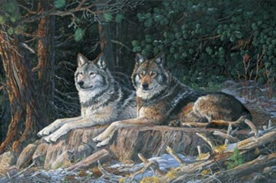 "Naturescapes ""Resting Point"" Fabric Wolf Quilt Panel by Northcott"