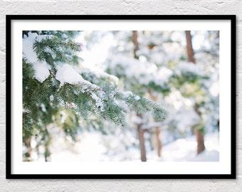 Winter Print, Forest Photo, Winter Evergreen, Forest Print, Winter Landscape, Colorado, Winter Photography, Printable Wall Art, Snow Print