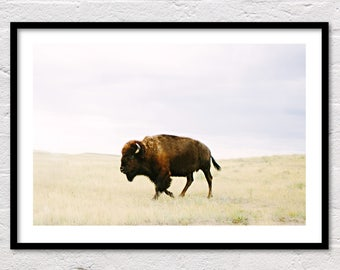 Buffalo Print, Bison Print, Printable Wall Art, Animal Prints, Southwestern Decor, Animal Art, Buffalo Photography, Bison Photo, Download