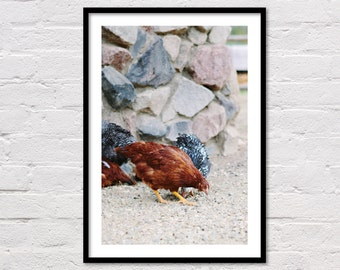 Farm Chickens Print, Country Decor, Animal Wall Art, Animal Printable, Country Photo, Modern Western Art, Farm Photography, Digital Download