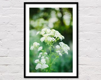 White Wildflowers Print, White Floral Printable, Modern Wall Art, White & Green Landscape Photography, Green Garden Decor, Instant Download