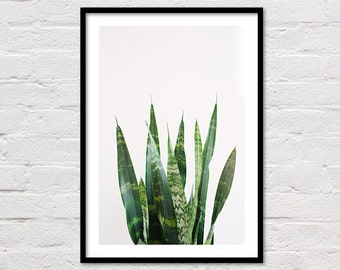 Tropical Print, Tropical Decor, Tropical Printable Art, Plant Poster, Green Art, Minimalist, Leaf Print, Tropical Art, Tropical Photography