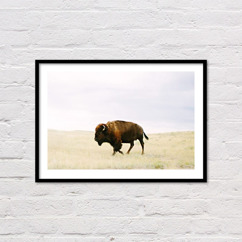 Buffalo Print Bison Print Printable Wall Art Animal Prints image 0