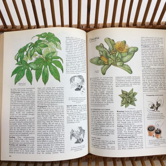 Incredible Vintage Success With Houseplants Guide Book How To Care Guide For Indoor Plants Interior Design Ideas Clesiryabchikinfo