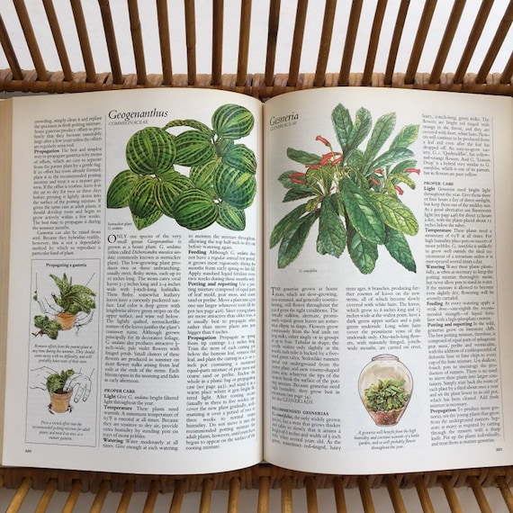 Surprising Vintage Success With Houseplants Guide Book How To Care Guide For Indoor Plants Interior Design Ideas Clesiryabchikinfo