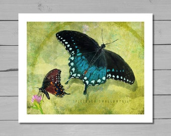 Butterfly art, Spicebush Swallowtail, Butterfly Print, Nature Art, Butterfly Painting, Wildlife Painting, Wall Decor
