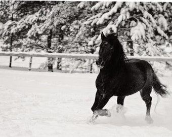 Snow Pony - single blank note card, Gifts for horse lovers