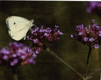 Cabbage Butterfly - single blank note card, Gifts for her, Gifts for mom, Gifts for nature lovers, Gifts for gardeners
