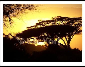 Acacia Tree at Sunset, Maasai Mara, Kenya, Safari, Landscape Photo, Nature Print, Evening Sun, Wall Art