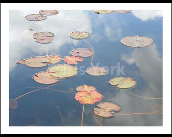 Lilies in the Sky, Photograph of Lilies in the Water and Reflections of Clouds at Yankeetown Pond Woodstock New York.  Landscape Wall Art