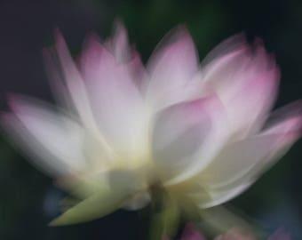 1000 Petal Lotus Etsy