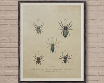 Spider Art, Vintage Print, Insect Print, Spider Wall Art, Spider Print, Wall Art Decor, Insect Print, Vintage Art, Nature Print, Spider Web