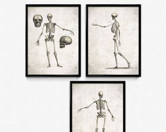 Human Skeletons Vintage Prints Set of 3 - Skeleton Poster - Anatomy Skeleton Art - Office Decor - Office Art - Doctor Decor - Anatomy Print