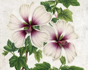 Purple and White Flowers Vintage Print - Flower Poster - Flower Art - Flower Picture - Home Decor - Home Art - Living Room - Living Room Art