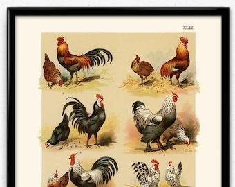 Chicken art     Etsy 1a9cb6