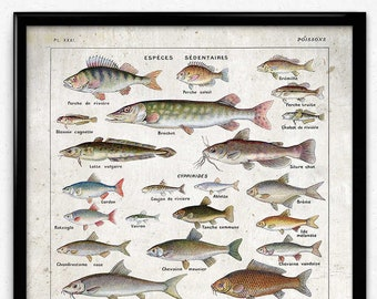 Freshwater Fish Vintage Print 5 - Fish Poster - Fish Art - Fish Picture - Poisson - Home Decor - Office Art - Office Decor - Larousse VP1158