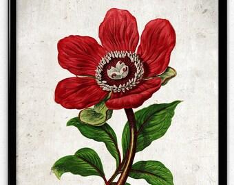 Peony Red Flower Vintage Print - Flower Poster - Flower Art - Flower Picture - Home Decor - Home Art - Living Room - Wall Art (VP1038)