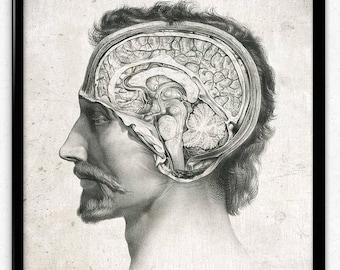 Anatomy Head and Brain Vintage Print - Anatomy Poster - Anatomy Art - Anatomy Picture - Wall Art - Office Decor - Office Art - Doctor Decor