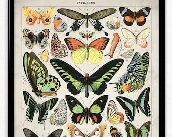Butterflies Vintage Print 2 - Butterflies Poster - Butterfly Art - Home Decor - Home Art - Kitchen - Kitchen Art (VP1060)