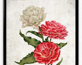 Double Tulips Pink and White Flowers Vintage Print - Flower Poster - Flower Art - Flower Picture - Home Decor - Wall Art - Living Room