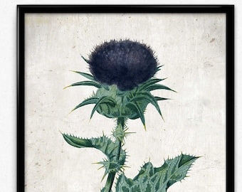 Purple Thistle Vintage Print - Thistle Poster - Thistle Art - Home Decor - Home Art - Living Room - Living Room Art