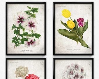 Flowers Set of 4 Vintage Print - Flower Poster - Flower Art - Flower Picture - Home Decor - Home Art - Living Room - Living Room Art