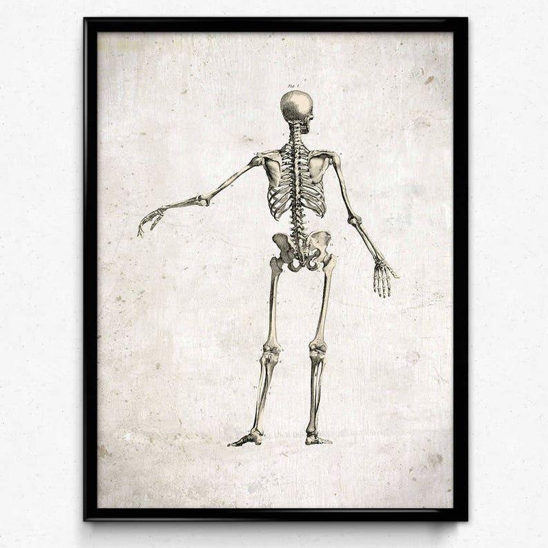 Anatomy Skeleton Vintage Print 2 Back View Skeleton Poster Etsy