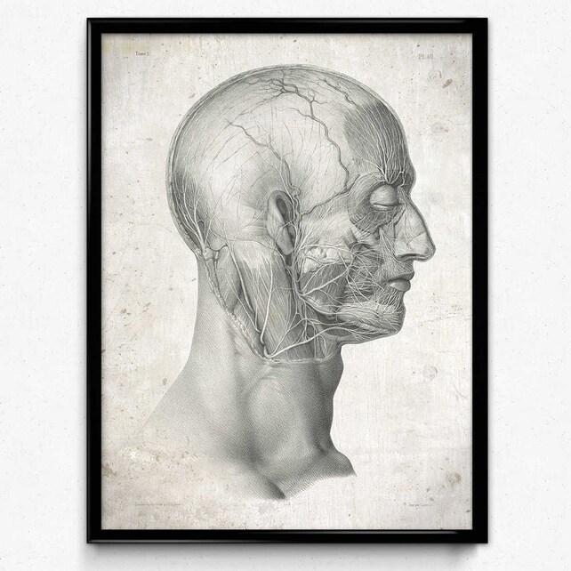 Anatomie-Kopf-Gesicht Nerven Vintage-Print Anatomie-Poster | Etsy