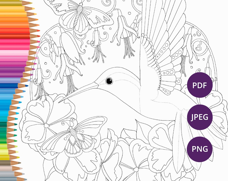 Hummingbird coloring pages Printable adult nature coloring | Etsy