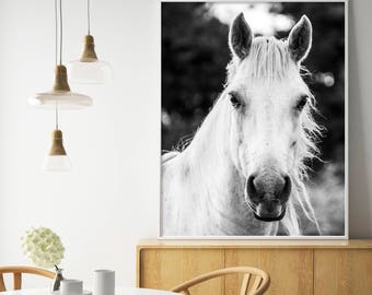 White Horse, Horse Print, Black and White Photography, White Horse Print, White Horse Photo, Wilderness Print, Equestrian, Animal Wall Art