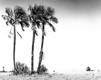 Palm trees in the Kalahari - Botswana