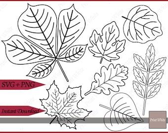 Leaf Svg Skeleton Leaf Cut File Leaf Clipart Leaf Png Leaf Etsy