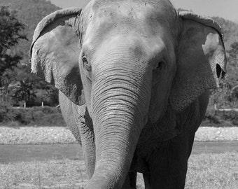 Chiang Mai Elephant Park