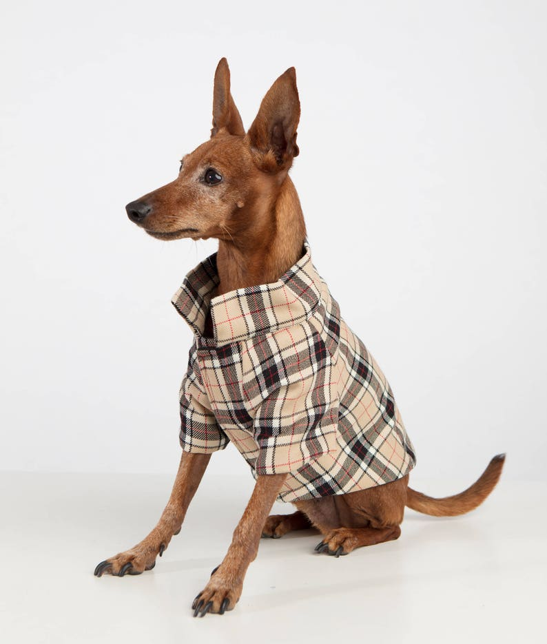 Dog Coat Model Burberry  70ab585c5ccc