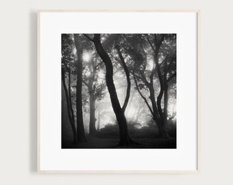 Killiney Hill, Ireland, Fine Art Photography Print