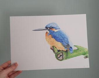 A4 print of watercolour illustration of a Kingfisher. Wall art. Interior decoration. Art print.