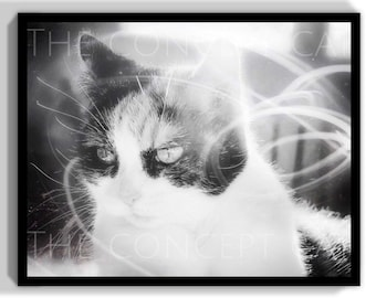 Cat art photography, surreal picture, original photo print, cat lover gift, retro sci-fi vintage, black and white decor, limited printing