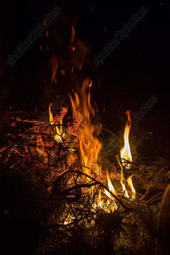 Digital Photo Burning Pine Branches Night Campfire Backdrop Etsy