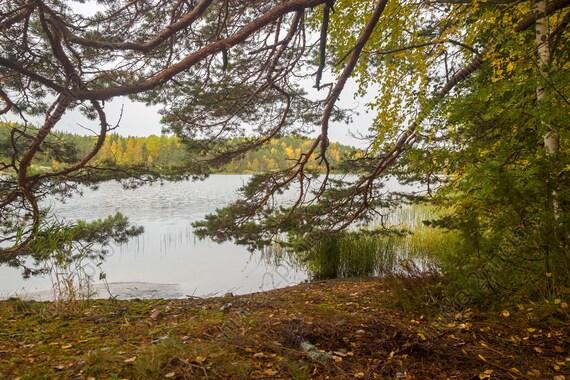 4 Forest Pond Digital Backdrops Bundle