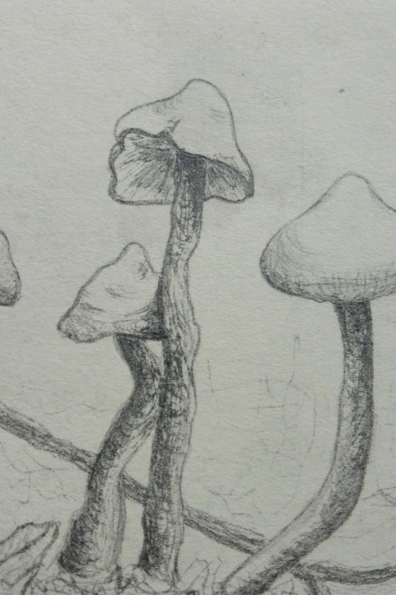 Butter Wax caps Intaglio print mushroom print wall art