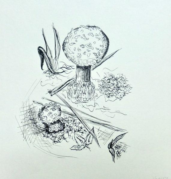 Amanite Tue Mouche Champignon Dessin Plume Et Encre De Dessin