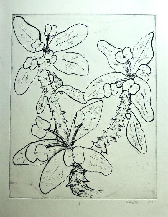 Crown of Thorns Lithograph print botanical print wall art
