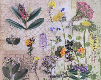15 Piece Spring Green Flowers Sticker Sheets | Floral Stickers | Real Flower Stickers | Junk Journal | Scrapbook Stickers |  Sticker Pack