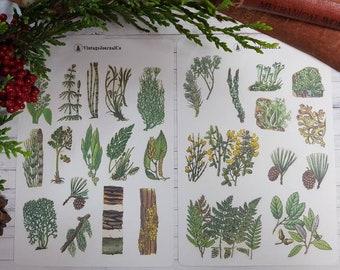 26 Piece Vintage Forest Greens Sticker Sheets   Woodland   Natural   Sticker Set   Planner   Journal   Scrapbook   Leaf   Die Cut   Pinecone