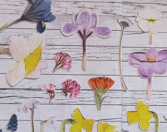 Colourful Spring Flower Sticker Sheets | Real Flower Stickers | Floral | Sticker Set | Botanical | Tulip | Happy Mail | Stationery