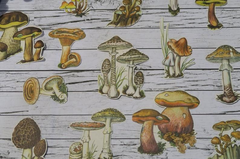 28 Piece Vintage Mushrooms Sticker Sheets  Fungi  Nature  image 0